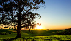 adelaide-hills-scene-home-page-fades